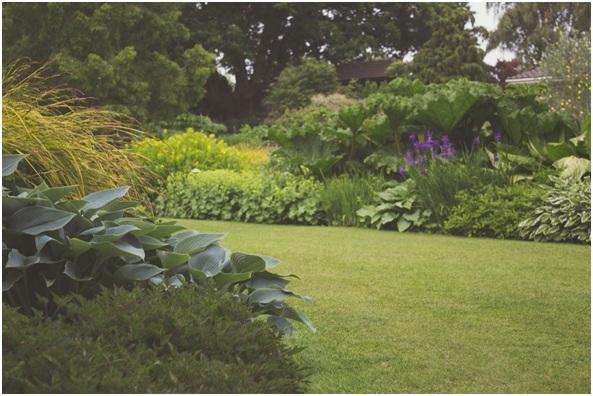 Cleanse your Garden